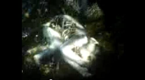Enlaceveracruz212 Encuentran Cadáver De Nahual A Orillas De La